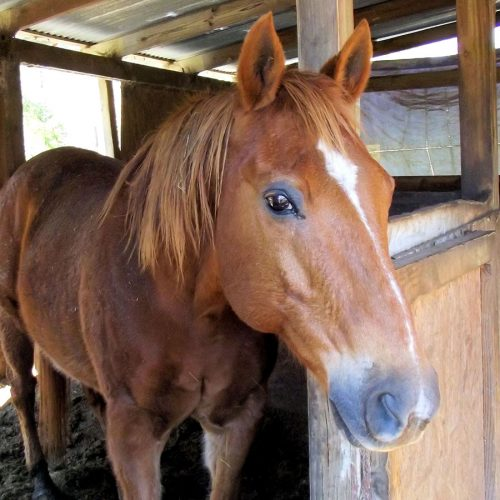 Equestrabed Horse Stable Bedding